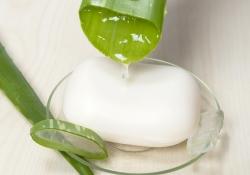Sabonete de Aloe Vera (Babosa)