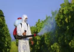 Alimento Orgânico – Tintura de Iodo Elimina Agrotóxicos?